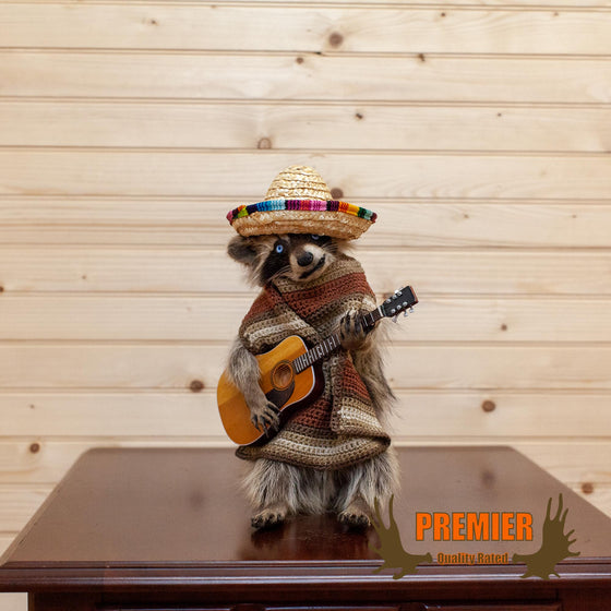Mariachi Raccoon Playing Guitar Taxidermy Mount - SW10116