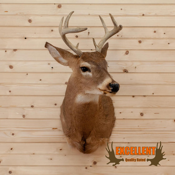 whitetail deer buck taxidermy trophy shoulder mount for sale
