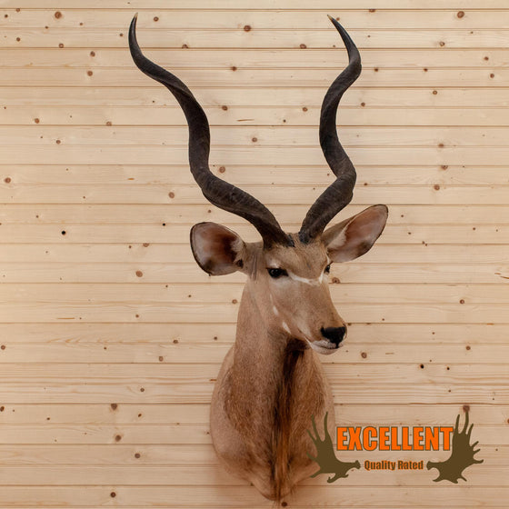 african greater kudu taxidermy mount for sale