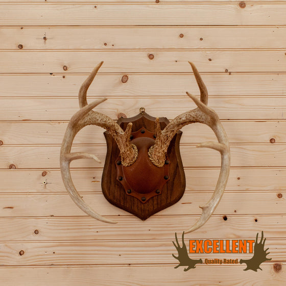 Whitetail Deer Antler Mount on Plaque SW10188