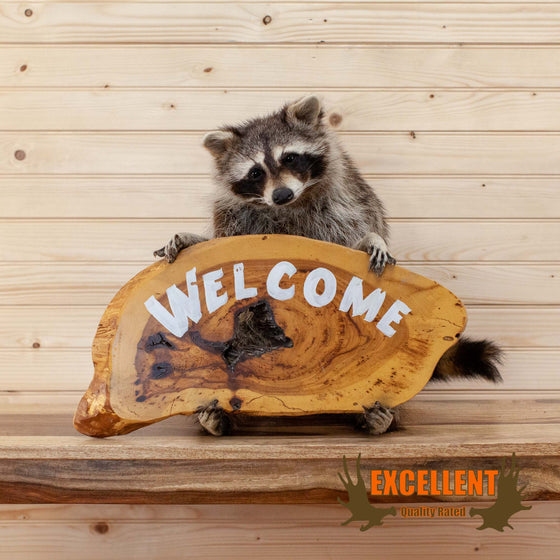 raccoon taxidermy welcome sign greeting