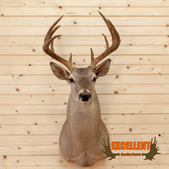 10 Point Whitetail Buck Taxidermy Mount - SW10222