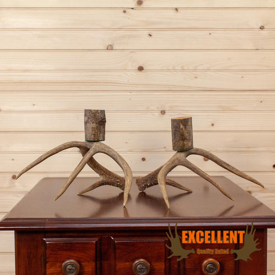 whitetail antler ash branch candelabra pair