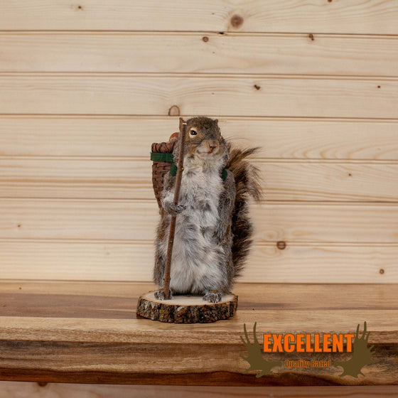 hiker hiking gray squirrel taxidermy mount for sale