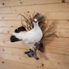 Perched Rock Ptarmigan in Winter Plumage Taxidermy Mount SW10331
