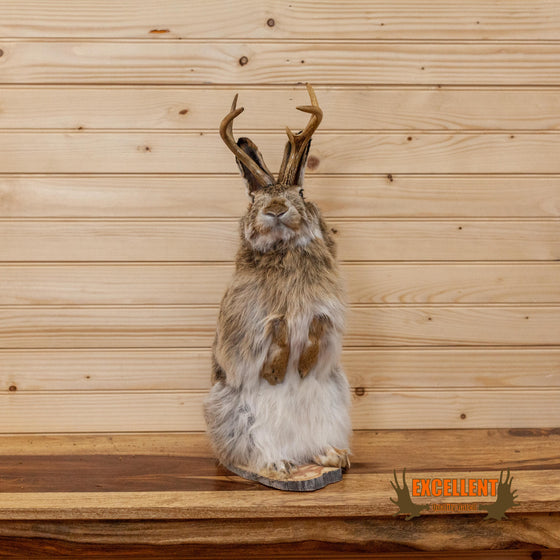 lifesize full body taxidermy mount jackalope with whitetail antlers for sale