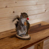 Fishing Squirrel Taxidermy Mount SW10350