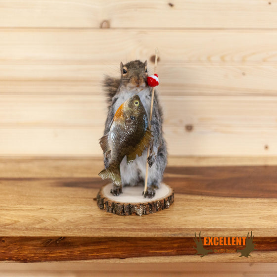 squirrel fishing novelty gift taxidermy mount for sale