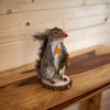 Fishing Squirrel Taxidermy Mount SW10351