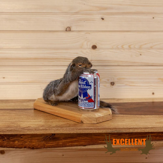 drunk beer drinking pabst blue ribbon squirrel taxidermy novelty gift for sale