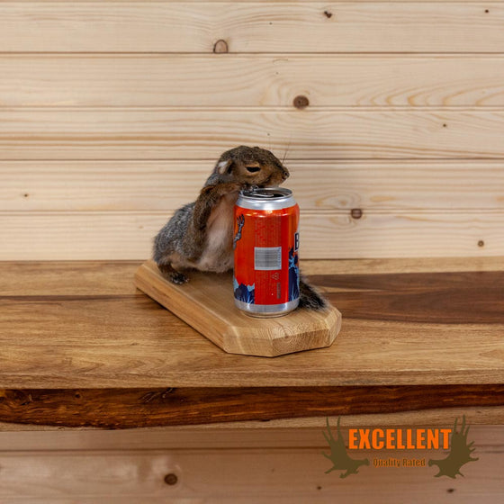 drunk beer drinking bush light squirrel taxidermy novelty gift for sale