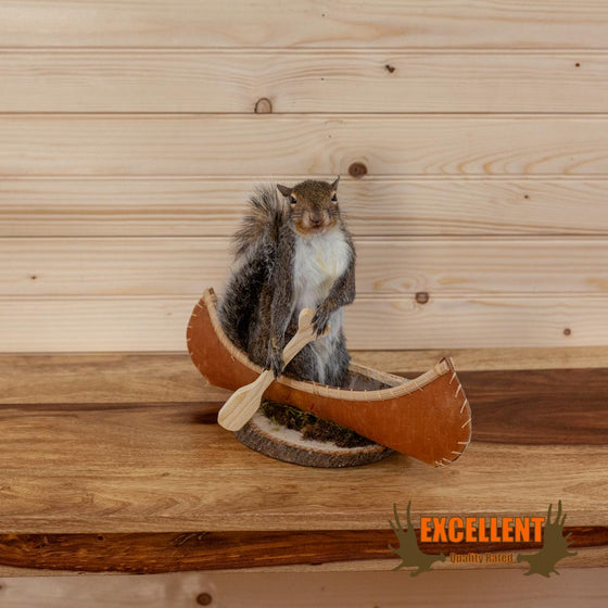 squirrel in canoe taxidermy novelty gift for sale