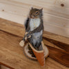 Squirrel in a Canoe Taxidermy Mount SW10360