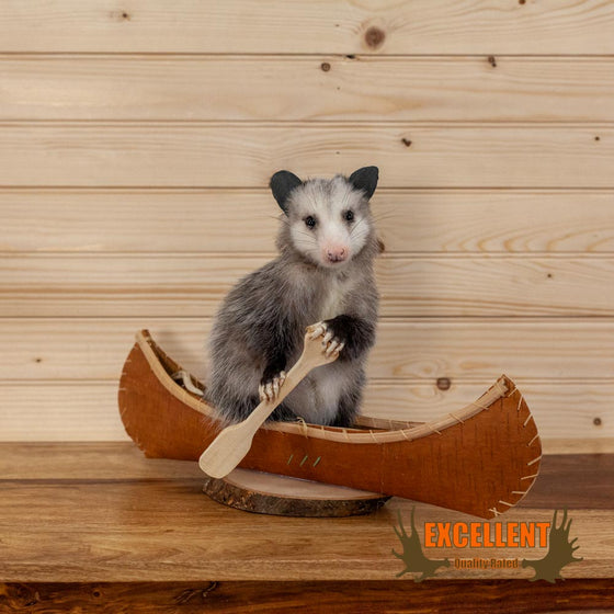 opossum paddling canoe taxidermy novelty gift for sale