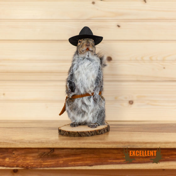 cowboy squirrel novelty gift taxidermy mount for sale