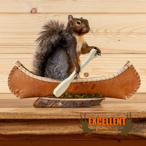 eastern gray squirrel paddling canoe taxidermy safariworks decor