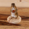 Chipmunk on Wood Base Holding Acorn Full Body Taxidermy Mount SW10397