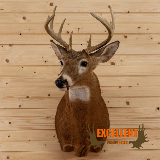 buck whitetail deer taxidermy shoulder mount for sale safariworks decor