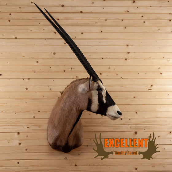 african gemsbok taxidermy mount for sale safariworks decor