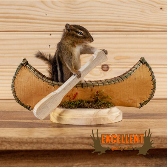 chipmunk paddling canoe taxidermy mount for sale safariworks decor
