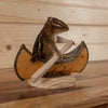 Chipmunk Padling Canoe Full Body Taxidermy Mount SW10464