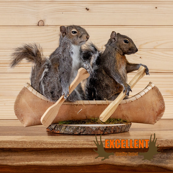 squirrels paddling canoe taxidermy mount novelty for sale safariworks decor