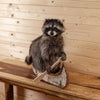 Raccoon Padling Canoe Full Body Taxidermy Mount SW10484