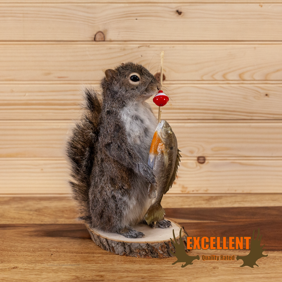 novelty taxidermy fishing squirrel for sale