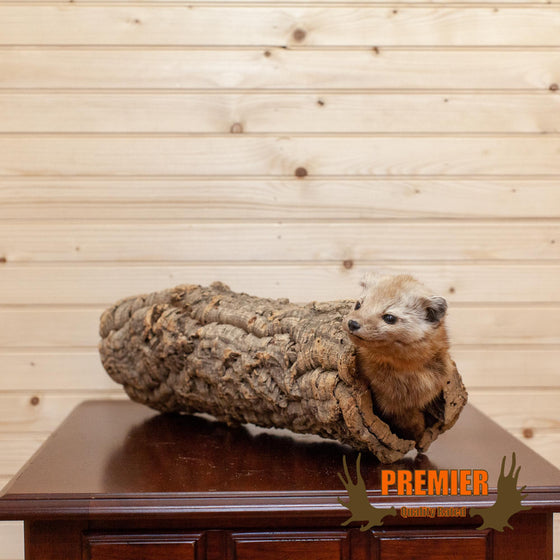 Pine Marten in Log Taxidermy Mount - SW6624