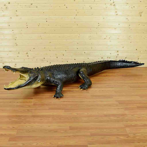 Alligator Taxidermy for Sale