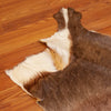 Craft Grade Blesbok Hide Skin GB5027