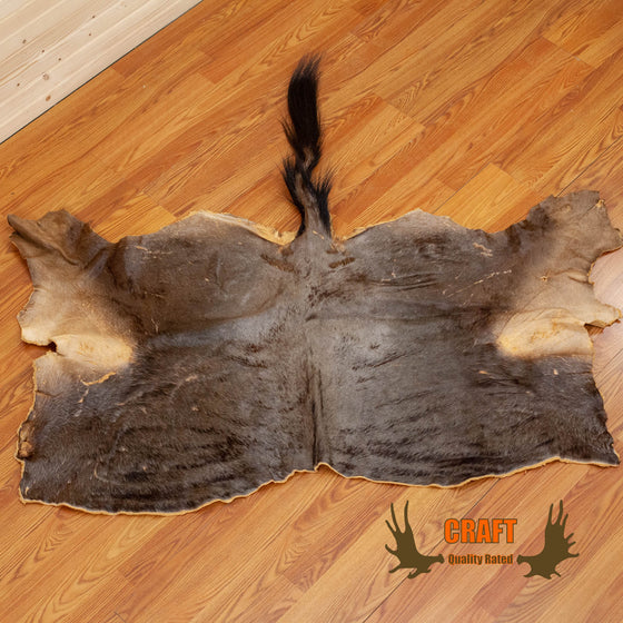 craft grade blue wildebeest skin hide for sale