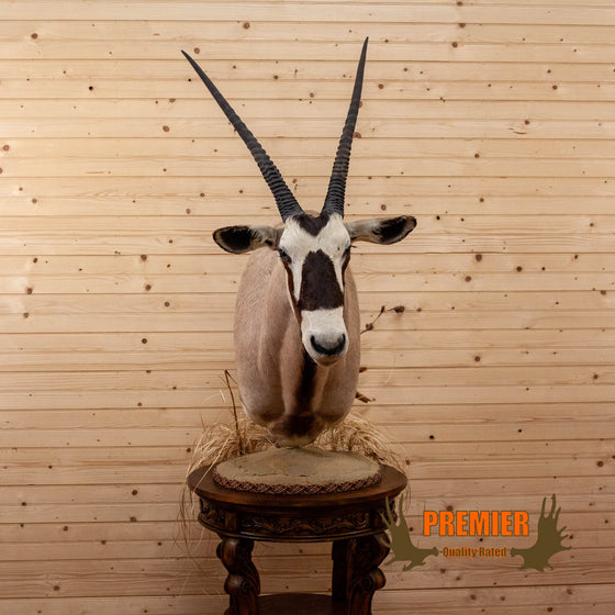 african gemsbok oryx taxidermy pedestal mount for sale