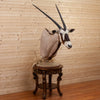 Excellent African Gemsbok Taxidermy Pedestal Mount BK7010