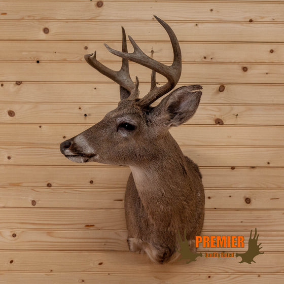 8 point coues deer shoulder mount taxidermy for sale