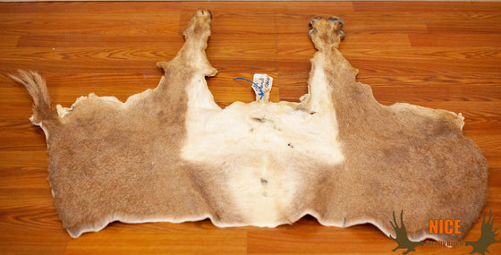 Nice Aoudad Back Skin Hide for Sale BK7022