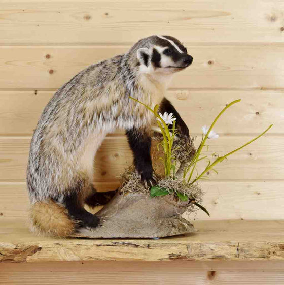 American Badger Game Mounts
