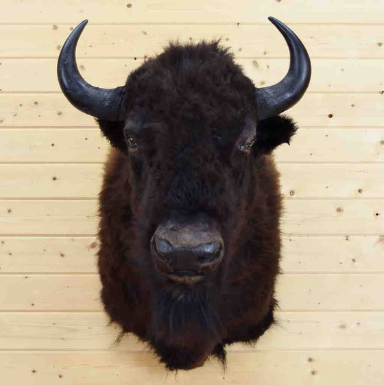 Bison Head for Sale