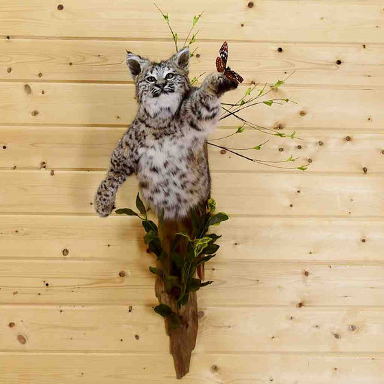 Bobcat Taxidermy Mount