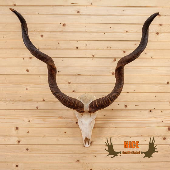 african greater kudu skull horns mount for sale