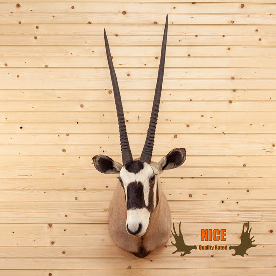 african gemsbok taxidermy shoulder mount for sale