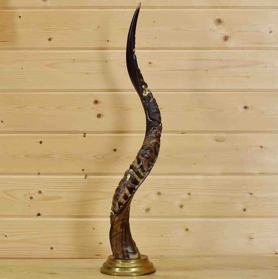 Carved African Kudu Horn for Sale