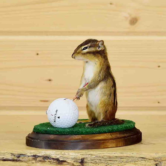 Golfing Chipmunk Taxidermy