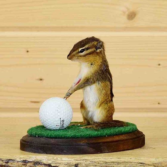 Chipmunk Taxidermy for Sale