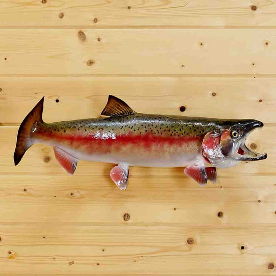 Coho Salmon Taxidermy Mount