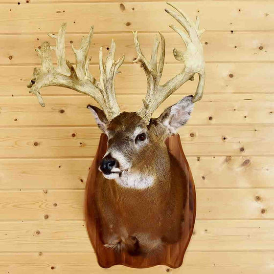 White Tail Deer for Sale
