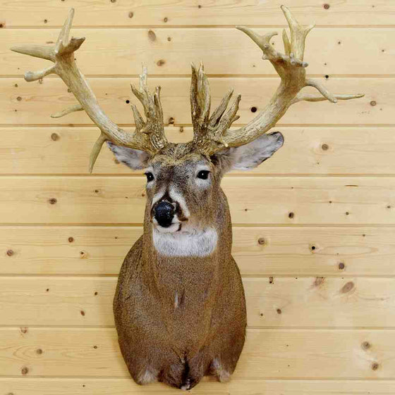 White-tailed Deer taxidermy for sale