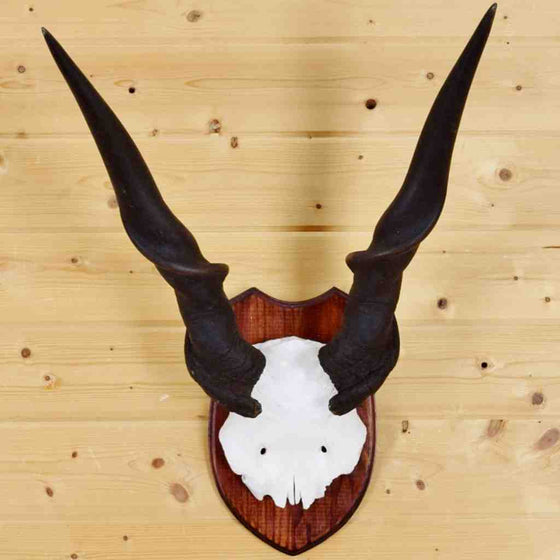 Eland Horns for Sale