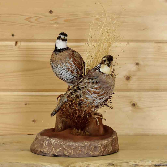Upland Game bird Taxidermy mount