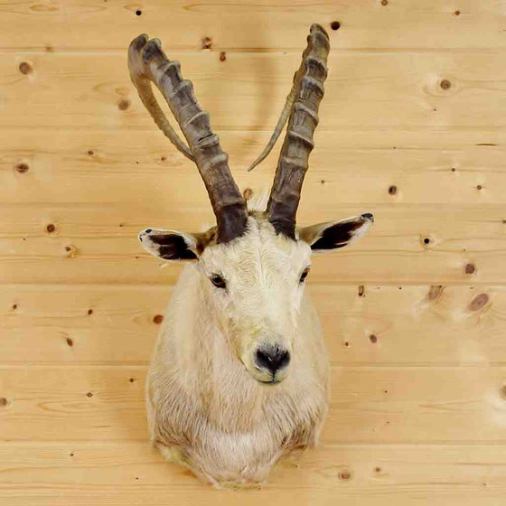 Cross Ibex Mount